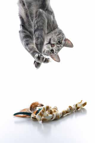 Your Cat's UTI -- the basics