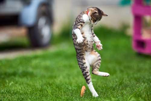 Treating Your Cat's UTI